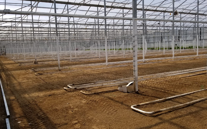 Photo of the interior greenhouse with dirt floor and metal poles staggered throughout